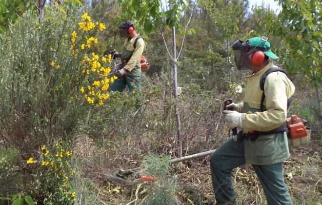 Covid-19: Governo dá mais um mês aos proprietários para que limpem os terrenos