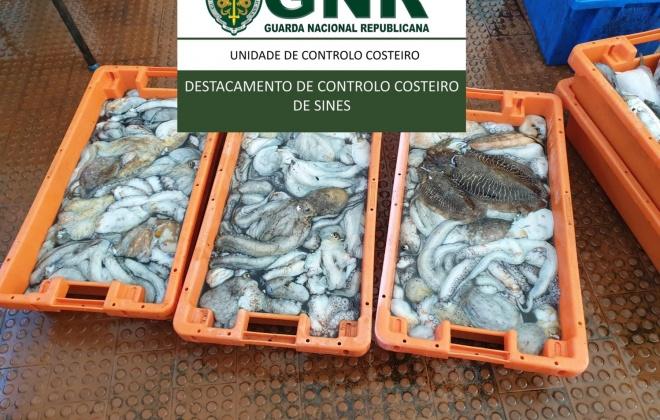 Unidade de Controlo Costeiro apreende 93 quilos de pescado na Azenha do Mar