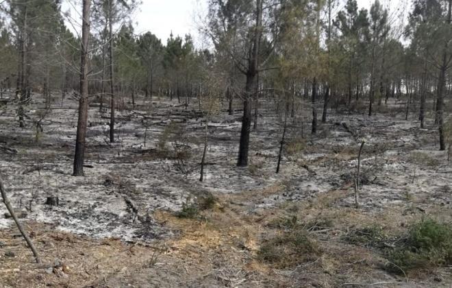 Bombeiros combateram incêndio em Vale Figueira, Grândola
