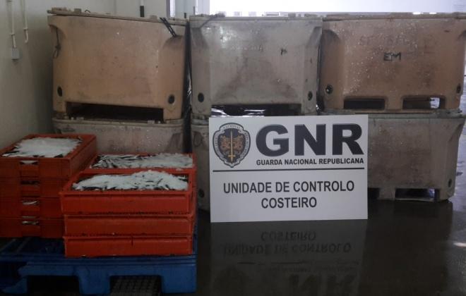 GNR apreendeu 448 quilos de sardinha na lota de Sines por excesso de captura