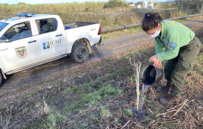 ICNF realiza ação de conservação de habitat na ribeira da Badoca