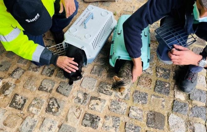 Gabinete Veterinário da Câmara de Sines desenvolve campanha para gatos