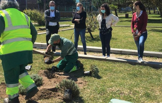 Sines comemorou Dia Mundial da Árvore com a plantação de 1200 plantas