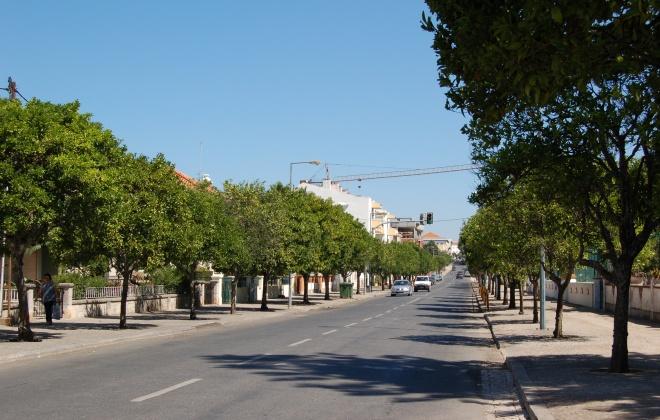Laranjas doadas a instituições do concelho de Santiago do Cacém