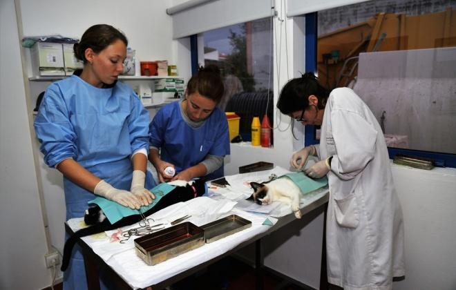 Grândola ocupa 1.º lugar distrital pelo trabalho realizado no âmbito das campanhas CED e esterilizações