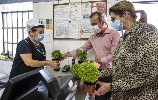Município de Sines e a ACLS distribuíram 2500 manjericos no concelho
