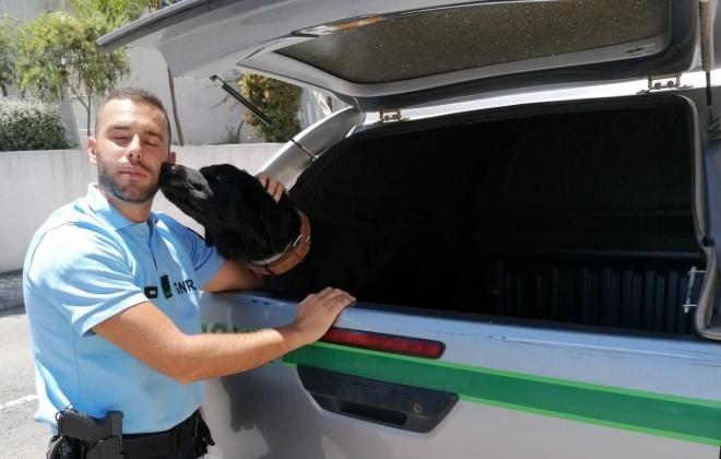 GNR resgata cadela debilitada em Odemira